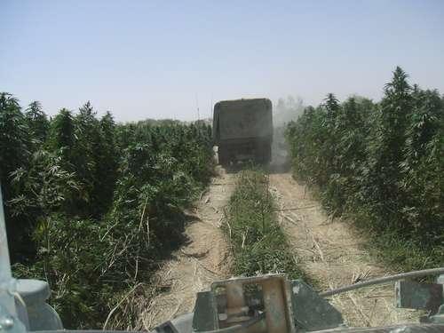 afghani defense 3