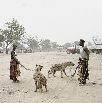 hyenas on a leash 3