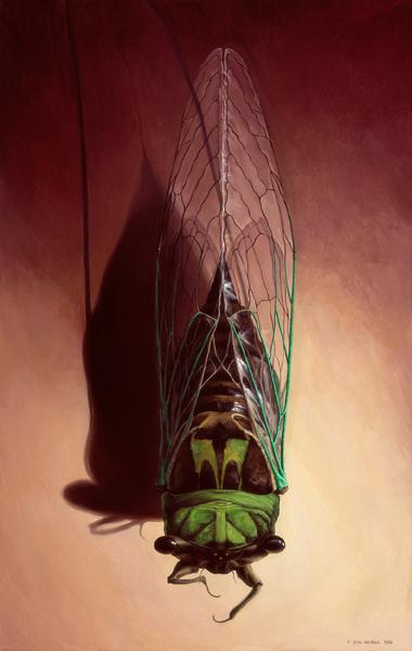 agnes_the_cicada.jpg